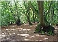 SU9693 : Path through woods by Tom Presland