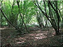 TG1312 : Stonyhole Plantation, Ringland by Evelyn Simak