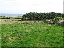 NU2422 : Field, Dunstan Steads by Richard Webb