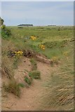 SD1578 : Haverigg Dunes by Mick Garratt