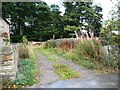 SE2610 : Footpath running north from Bilham Road by Christine Johnstone