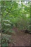 TQ8187 : Path Through Hadleigh Great Wood by Glyn Baker