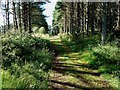 NH9820 : Going Into The Abernethy Forest by Mary and Angus Hogg