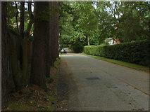 SU9266 : Llanvair Drive, South Ascot by Alan Hunt