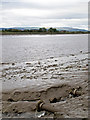 NS8593 : River Forth near Cambus by William Starkey