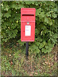 TM2573 : Barley Green Postbox by Adrian Cable