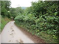 SO2729 : Lane and footpath in the Vale of Ewyas by Jeremy Bolwell