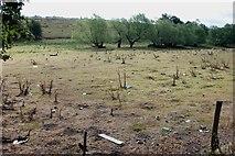 SO8484 : Pasture off Hyde Lane Kinver by Mick Malpass