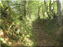SN0937 : Hollow way near Pentre Ifan by Lesley Eddleston