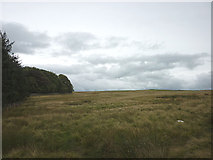 NY6313 : The edge of Maskriggs Wood by Karl and Ali