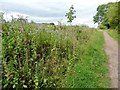 SE3835 : Wild mint in the hedgerow, Barnbow Lane by Christine Johnstone