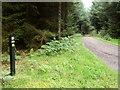 NX6571 : The Red Kite Trail, near Loch Ken by Bob Peace