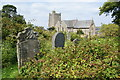 SN0538 : Overgrown churchyard of St Mary's, Newport by Bill Boaden
