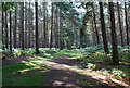 TL1140 : Rowney Warren Woods Near Chicksands by Martin