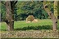 NZ8804 : Ruined Barn in Field by Mick Garratt
