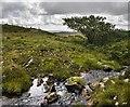 NR3465 : Allt Garbh, near Scarrabus, Islay by Becky Williamson