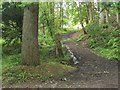 NS4276 : Path in Overtoun Estate by Lairich Rig