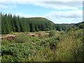 NX6460 : Glengap glen by Bob Peace