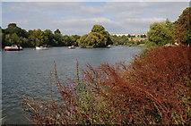 TQ1773 : River Thames near Richmond by Philip Halling