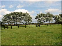 TF8707 : Paddocks east of Brown's Lane, Holme Hale by Evelyn Simak