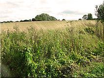 TF8707 : Stubble field east of Brown's Lane, Holme Hale by Evelyn Simak