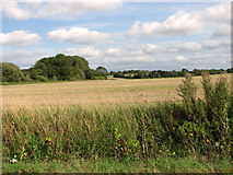 TF8707 : Harvested field east of Brown's Lane, Holme Hale by Evelyn Simak