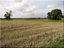 TF8707 : Field boundary west of Brown's Lane, Holme Hale by Evelyn Simak