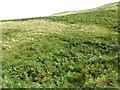 NT3554 : Bracken and Grass covered hillside by M J Richardson