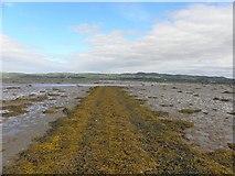C4448 : Trawbreaga Bay (2) by Kenneth  Allen