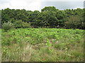 SX8377 : Bracken advancing, Chudleigh Knighton Heath  by Robin Stott