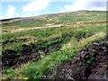 NS6282 : Campsie Fells, new plantings by Robert Murray