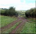 ST3195 : Track through a gap in a hedge near Cwm-heron Wood by Jaggery