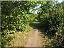SE5209 : Roman Road heading north by JThomas
