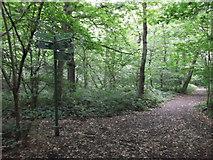 TQ4475 : Green Chain Walk junction in Eltham Park North by David Anstiss