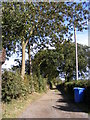 TM4480 : The Entrance to Town Fen & Brampton Willow by Adrian Cable