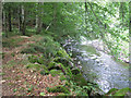 SX8481 : Mossy boulders by the Teign  by Robin Stott
