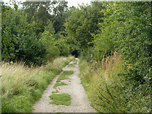 TQ5782 : Path towards Belhus Woods Country Park by Robin Webster