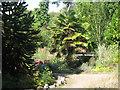 TQ6001 : Trachycarpus at Hampden Park by Oast House Archive