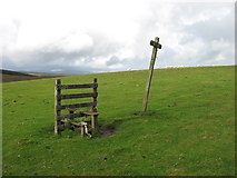 SN8976 : On the Wye Valley Walk ! by David Purchase