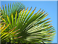 TQ6001 : Palm Leaves by Oast House Archive