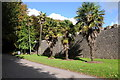 SN0100 : Palm trees at Lamphey by Philip Halling