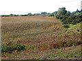 SU1905 : Bracken, Vereley Hill by Maigheach-gheal