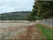 SK2171 : Harvested field by Long Rake Plantation by Andrew Hill