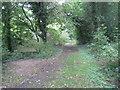 SJ5270 : Woodland Track at Brine's Brow by Jonathan Thacker