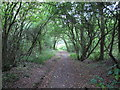 TQ7986 : Woodland walk by Roger Jones