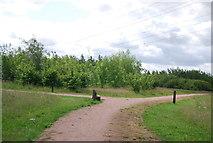 TQ5584 : Paths, Bonnett's Wood by N Chadwick