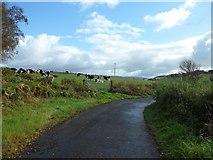 NS3572 : Cattle in field by Cloak Road by Stephen Sweeney