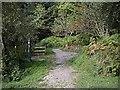 NJ5041 : Forest Walks signpost by Stanley Howe