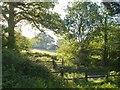 SY1090 : East Devon Way near Bowd by Derek Harper