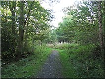 NT0380 : Path, Shore Wood by Richard Webb